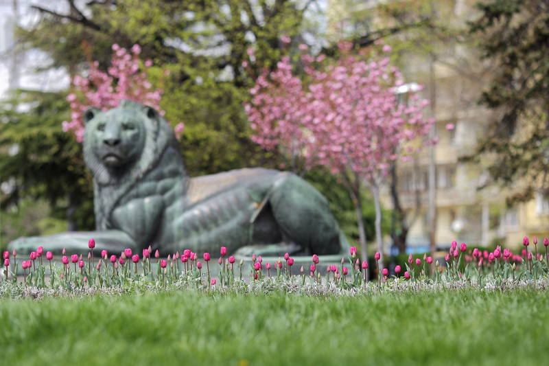 The coloured figures in the parks of Sofia will be replaced with greenery