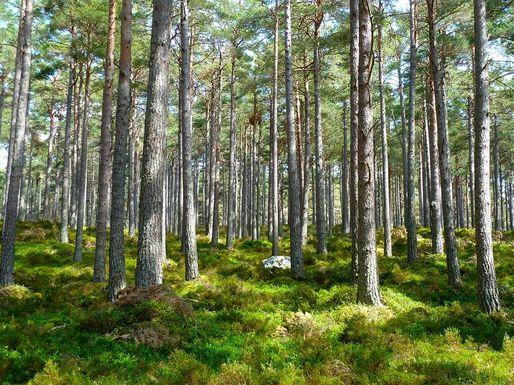 Slider forest 272595 960 720