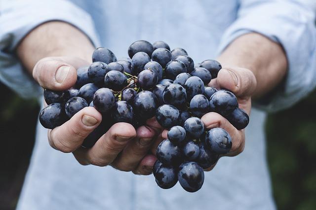 Grapes 690230 640