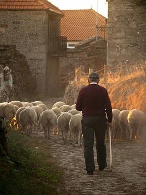 Slider sheep 298650 640