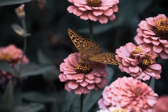 Slider flowers 3975556 640