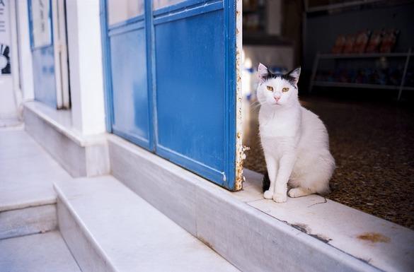 Slider cat 3439500 960 720