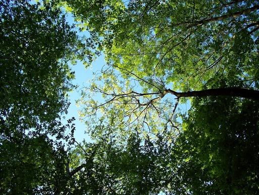 Slider trees 795567 1280