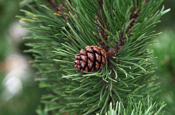 Slider pine 2988599 1920