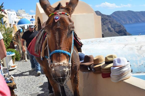 Slider donkey