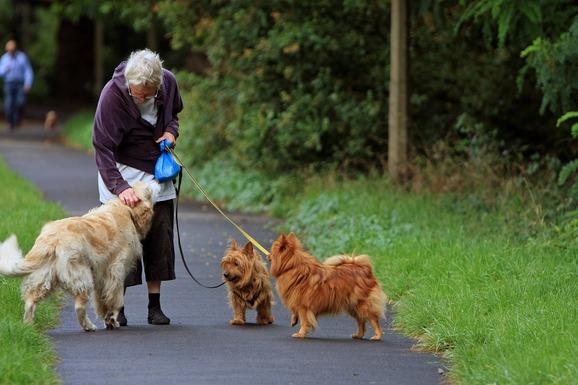 Slider dog walker
