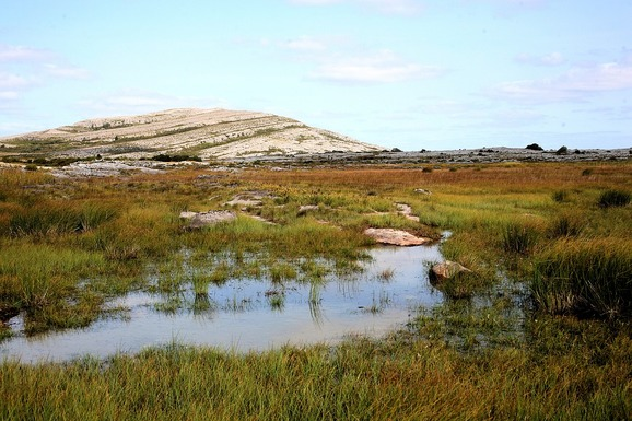 Slider kildare biodiversity project