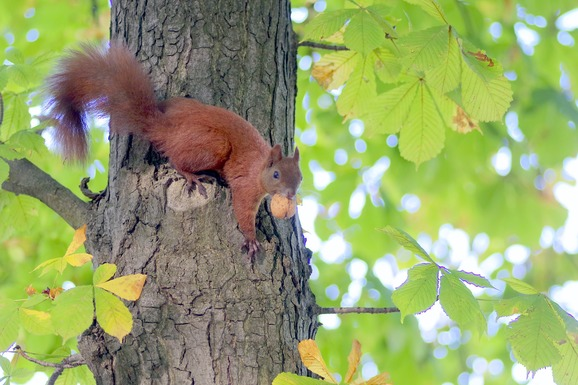 Slider the squirrel 1693575 1920