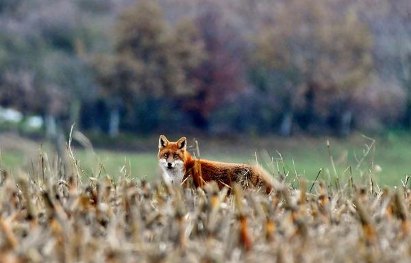 Slider fox 4653741 1920