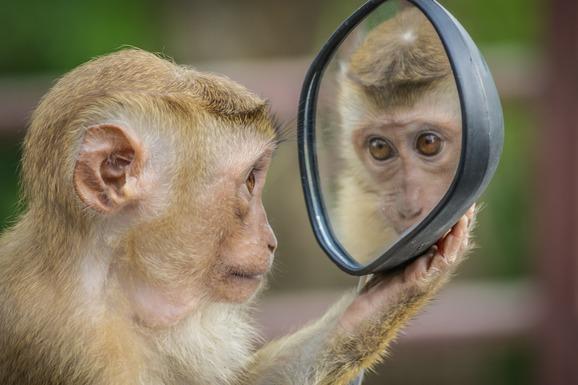 Slider monkey 3512996 1920