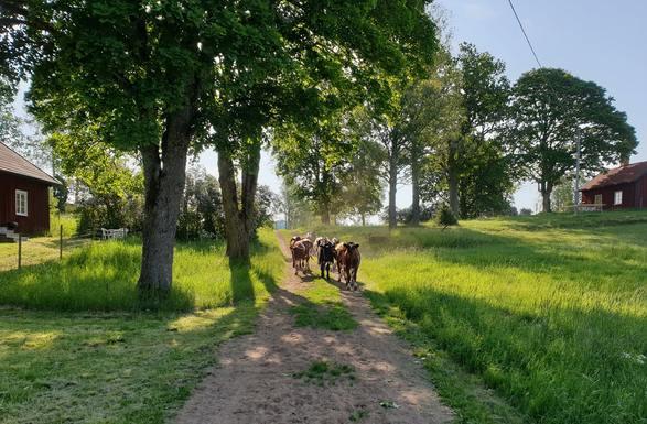 Slider swedish farm somewhere