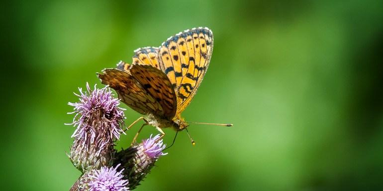 Slider biodiversity