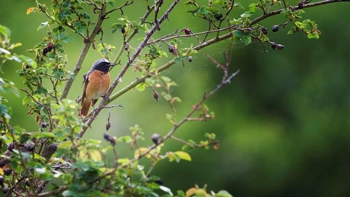 Slider bird