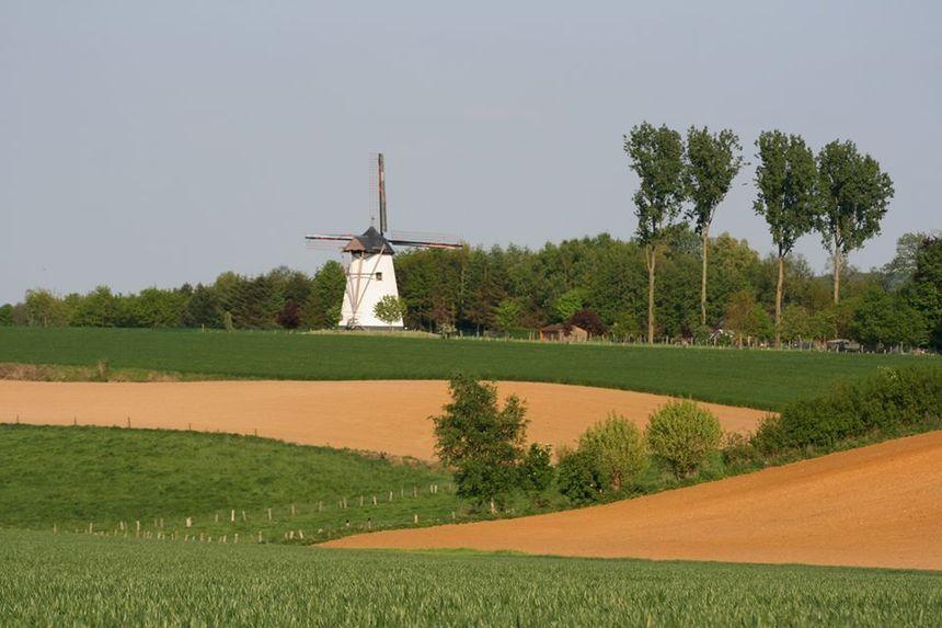 Default molen ter hengst   gemeente maarkedal on fb