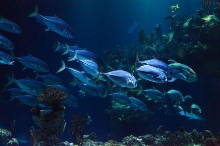 Optimized aquarium 21668 1920 pixabay