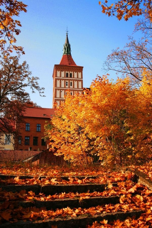Optimized autumn olsztyn