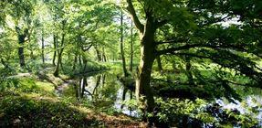 Biggest thumb green areas   gemeente rijswijk