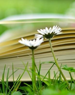 Book 2304389 960 720
