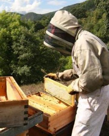 Cantabrian beekeeper