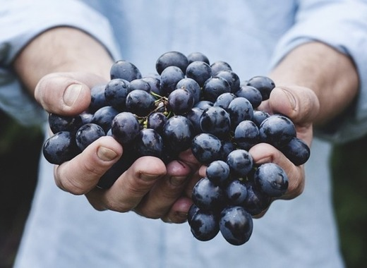 Medium grapes 690230 640