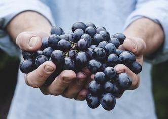 Thumb grapes 690230 640