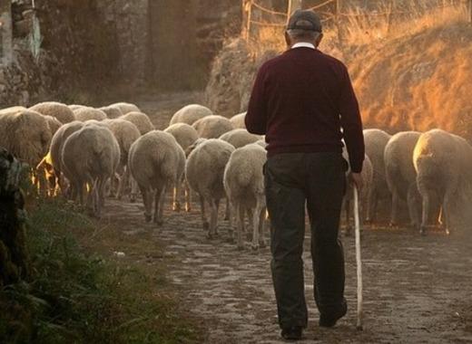 Medium sheep 298650 640