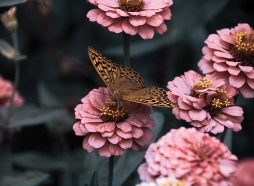 Medium flowers 3975556 640
