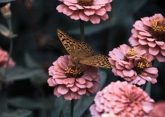 Thumb flowers 3975556 640