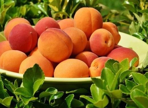 Medium apricots 1522680  340