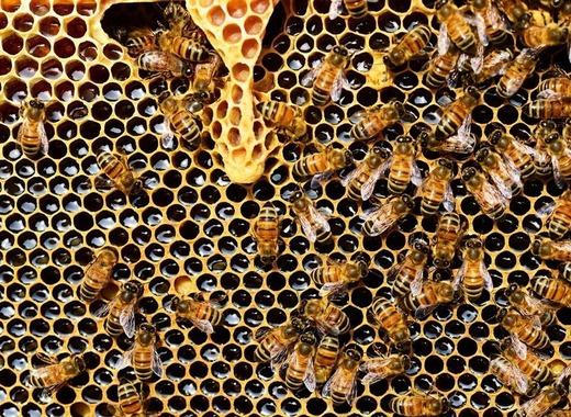 Medium beehive 337695 1280