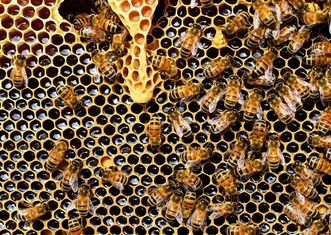 Thumb beehive 337695 1280