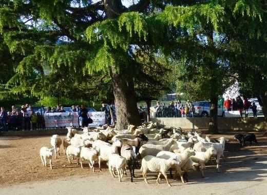 Medium moutons min