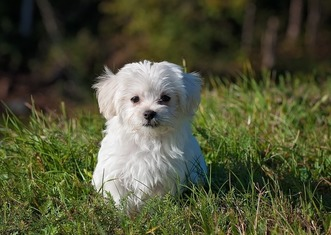 Thumb dog 1123016 1280