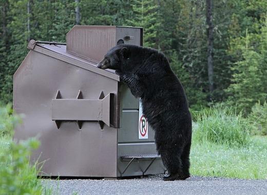 Medium black bear 1972219 1280