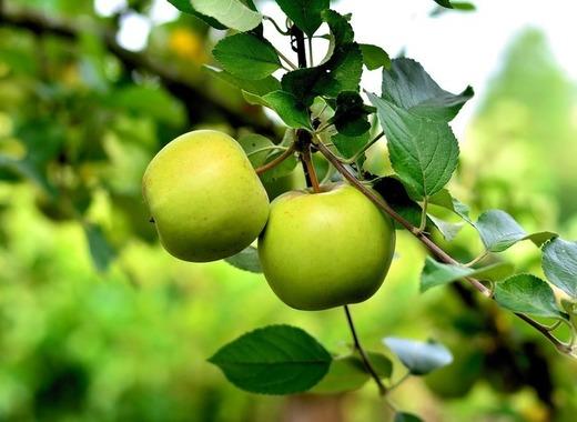 Medium apple 3866387 1280