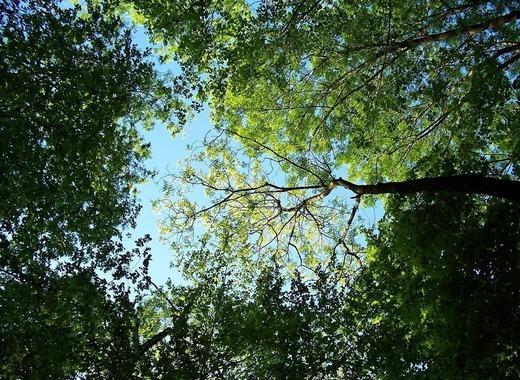 Medium trees 795567 1280
