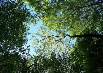 Thumb trees 795567 1280
