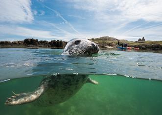 Thumb dalkey seal nigel motyer
