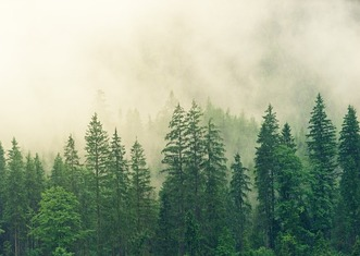 Thumb fog 3622519 1920