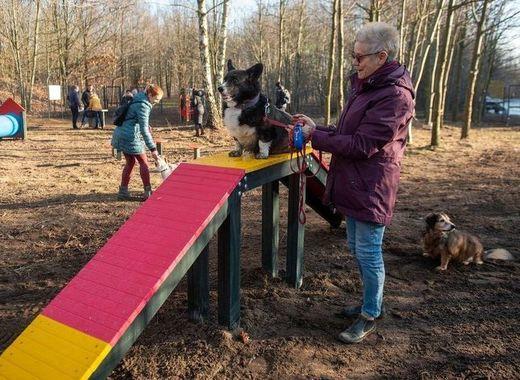 Medium dog park in lodz    pawe%c5%82 %c5%81acheta