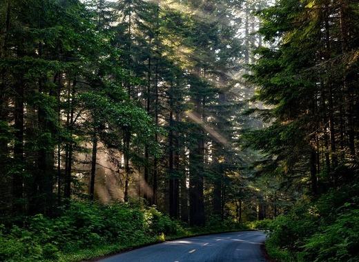 Medium forest 1598756 1920