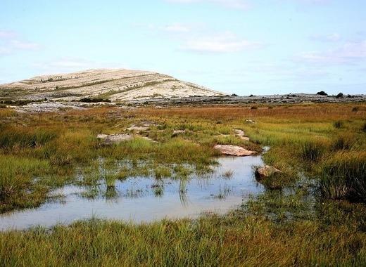 Medium kildare biodiversity project
