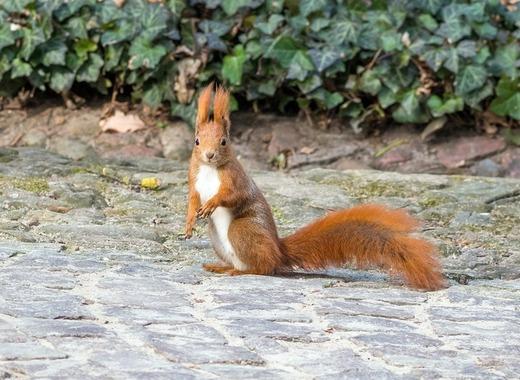 Medium the squirrel 4028041 1920