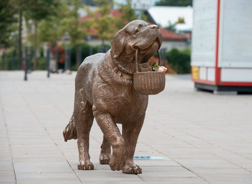 Medium kaunas st.bernard sculpture