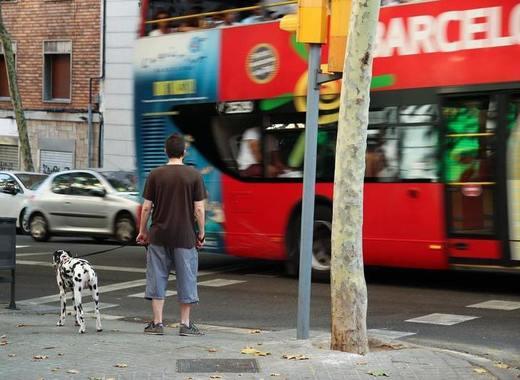 Medium barcelona bus