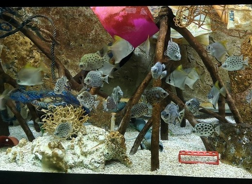Medium akvarium s plasty4 foto zoo brno