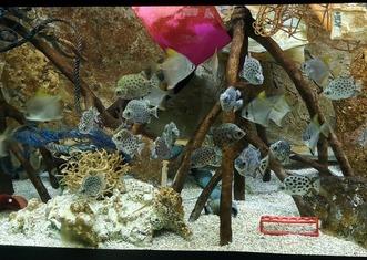 Thumb akvarium s plasty4 foto zoo brno