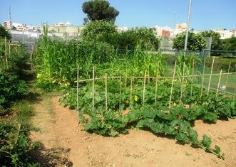 Thumb palma de mallorca urban garden