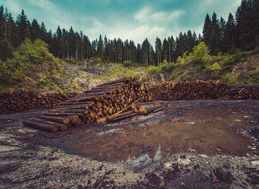 Medium forestry