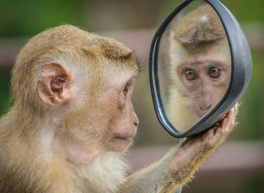 Medium monkey 3512996 1920